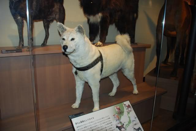 hachiko-do-museo