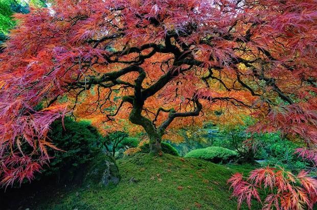 Jardim de Portland, localizado no parque de Washington, em Oregon, EUA