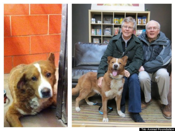 20140311perro-bravo-trio-animal-foundation-590x442