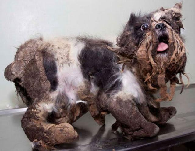 cachorro-resgatado-5