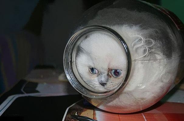 Gatos-sao-liquidos-12