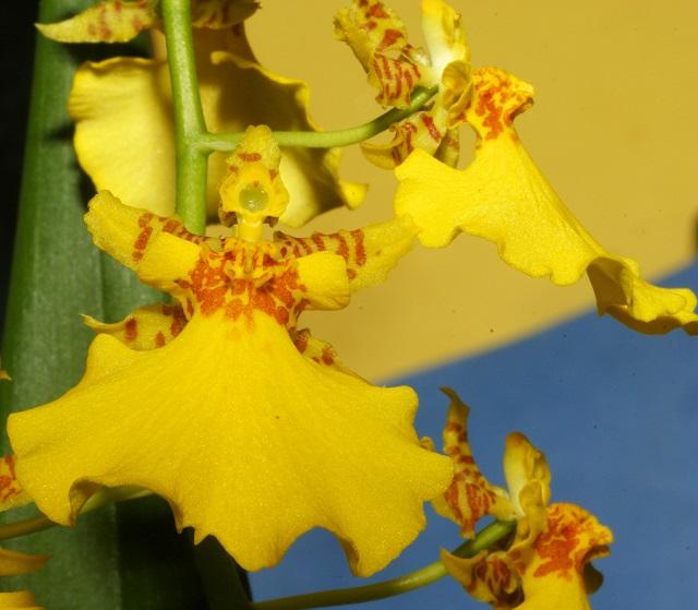 Orquídeas-Ambientalistas-em-rede-5