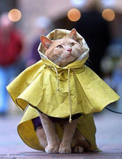 gato com capa de chuva