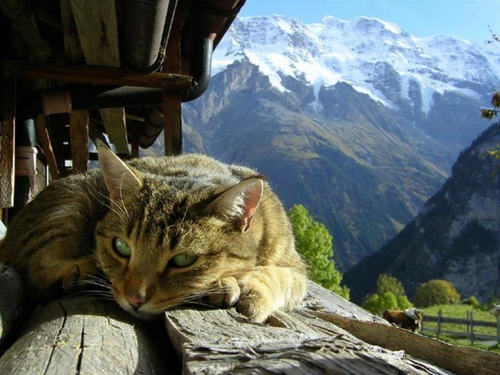 gatinho relaxando