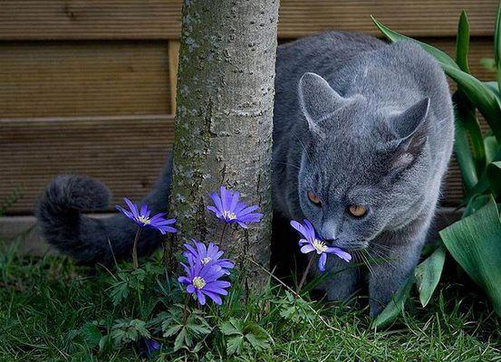 gato cheirando flor