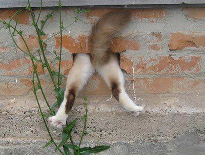 gato no buraco