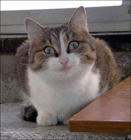 gato sorrindo