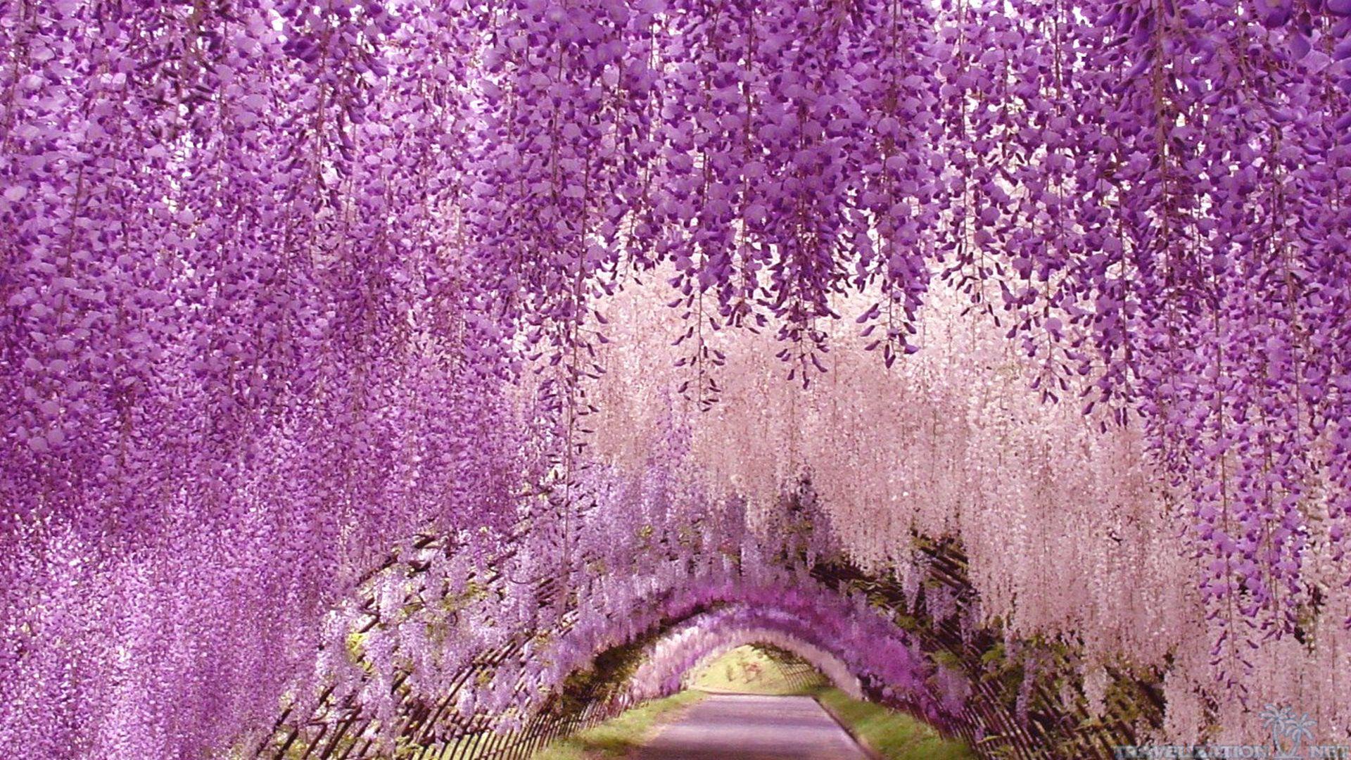 Ashikaga