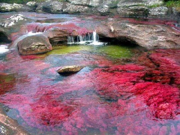 Cano Cristales, o rio de 5 cores da Colômbia