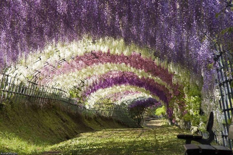 ashikaga-flower-park-10[2]