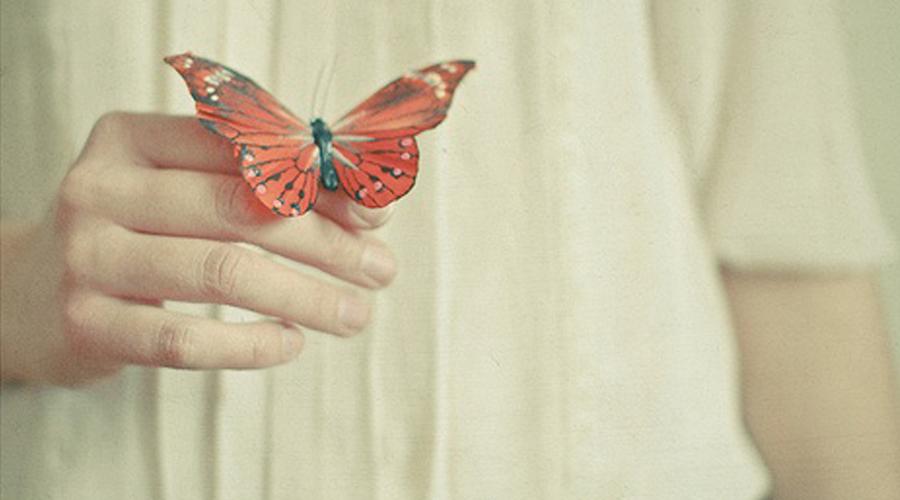 borboleta capa