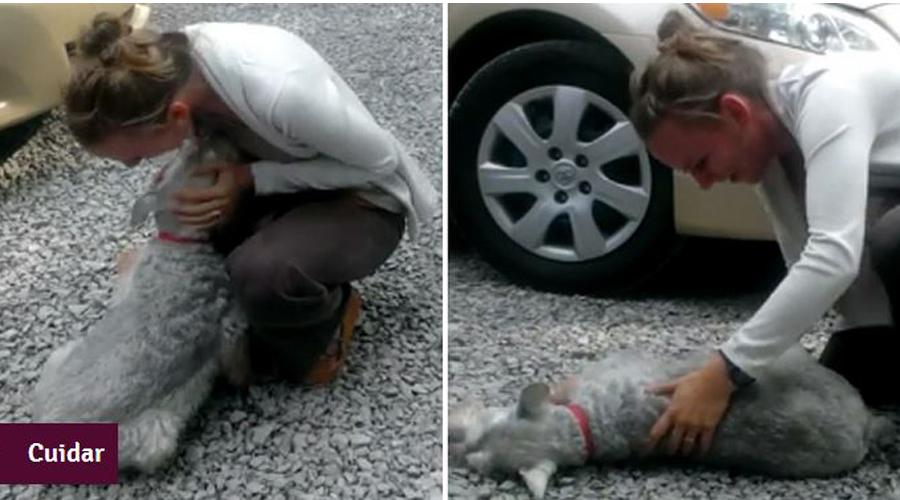 Cachorrinha desmaia ao encontrar a dona após 2 anos de separação