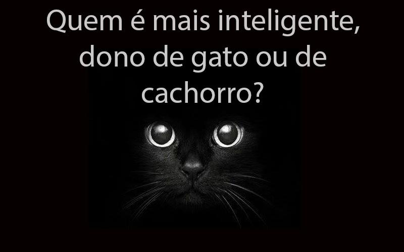 inteligente gato ou cachorro