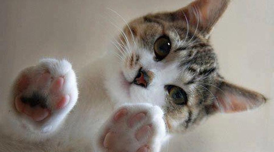 5 coisas que você não sabia sobre a vida secreta dos gatos