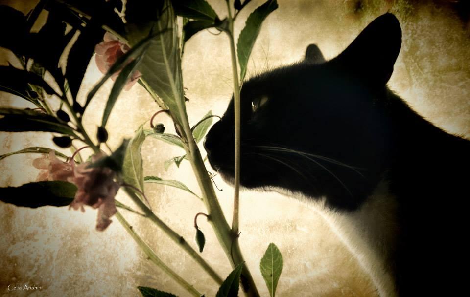 Entre lentes, gatos e fotografia: o trabalho de Celia Anahin