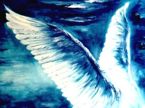 asas-de-anjo