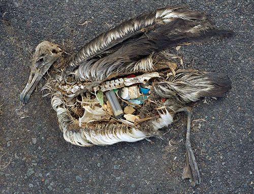 lixo e aves marinhas