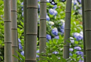 bambu frag