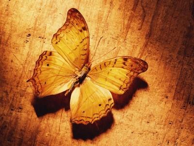 borb amarela 22