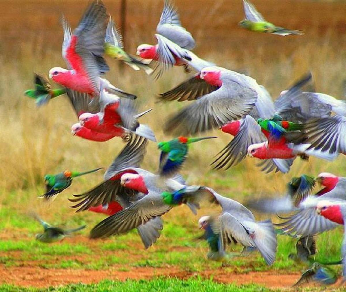 Resultado de imagem para índia proibe encarceramento de pássaros