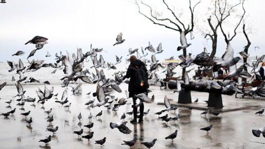 pombos para texto galeano