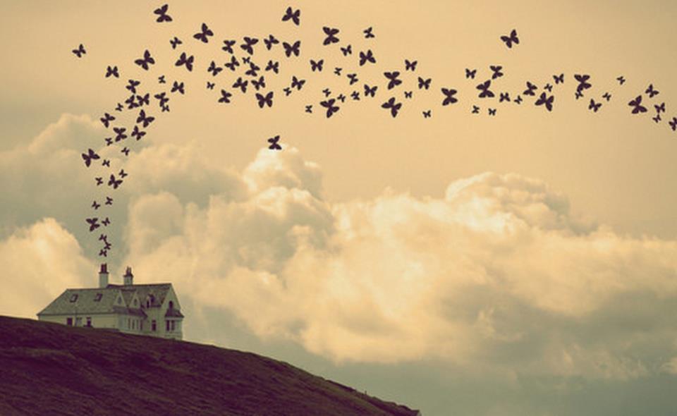voos-das-borboletas