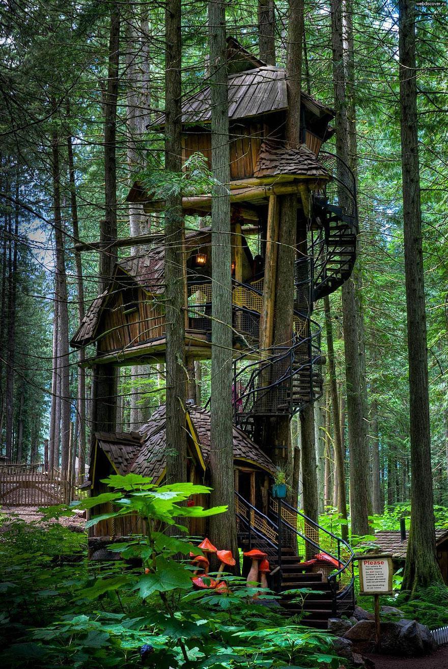 casas na árvore_1