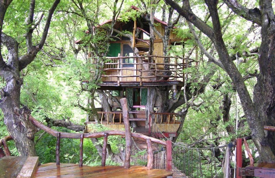 casas na árvore_9