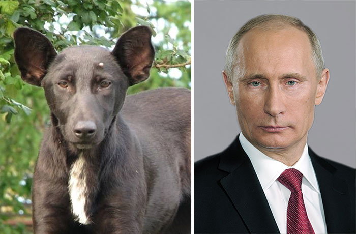 celebridades animais_1