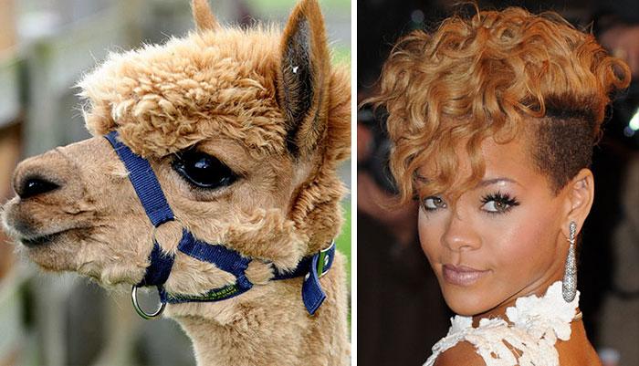 celebridades animais_13