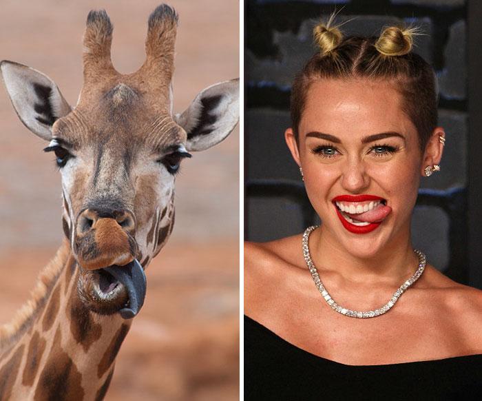 celebridades animais_15