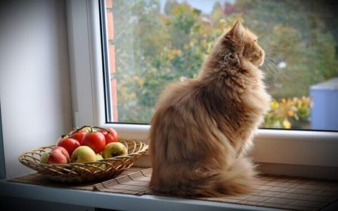 gatos-janela