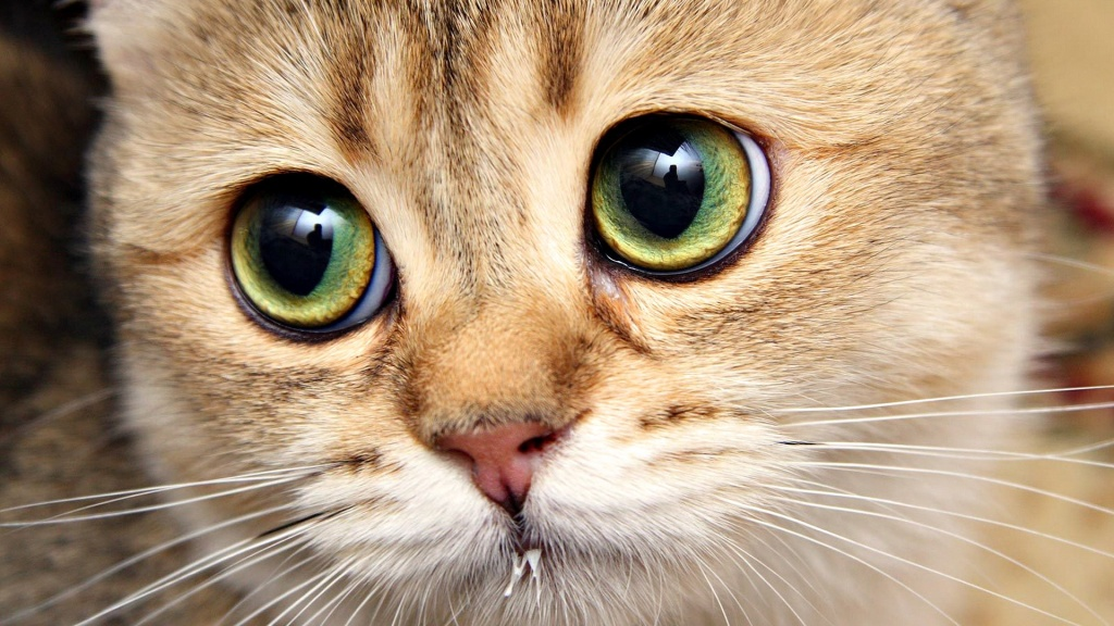 linguagem-corporal-gatos-olhos-1024x576