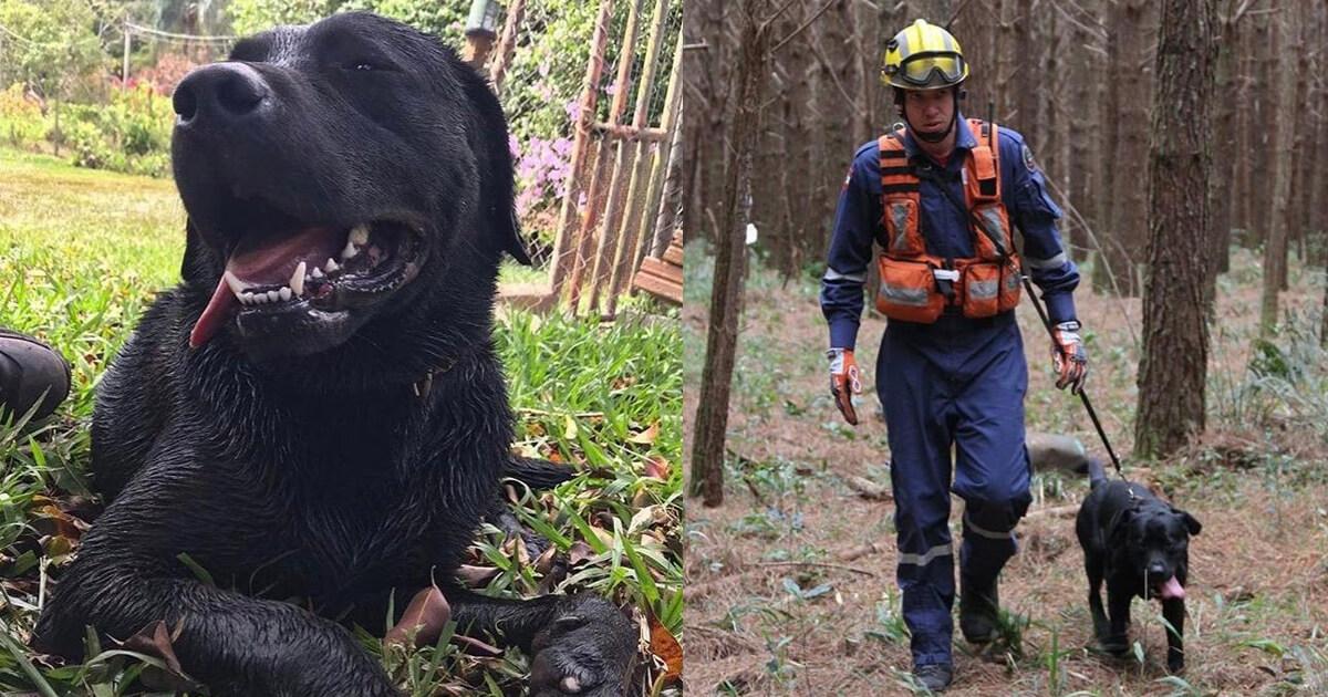 Resultado de imagem para Herói até o fim: Cão que ajudou em resgates de Brumadinho perde a vida fazendo buscas em Santa Catarina