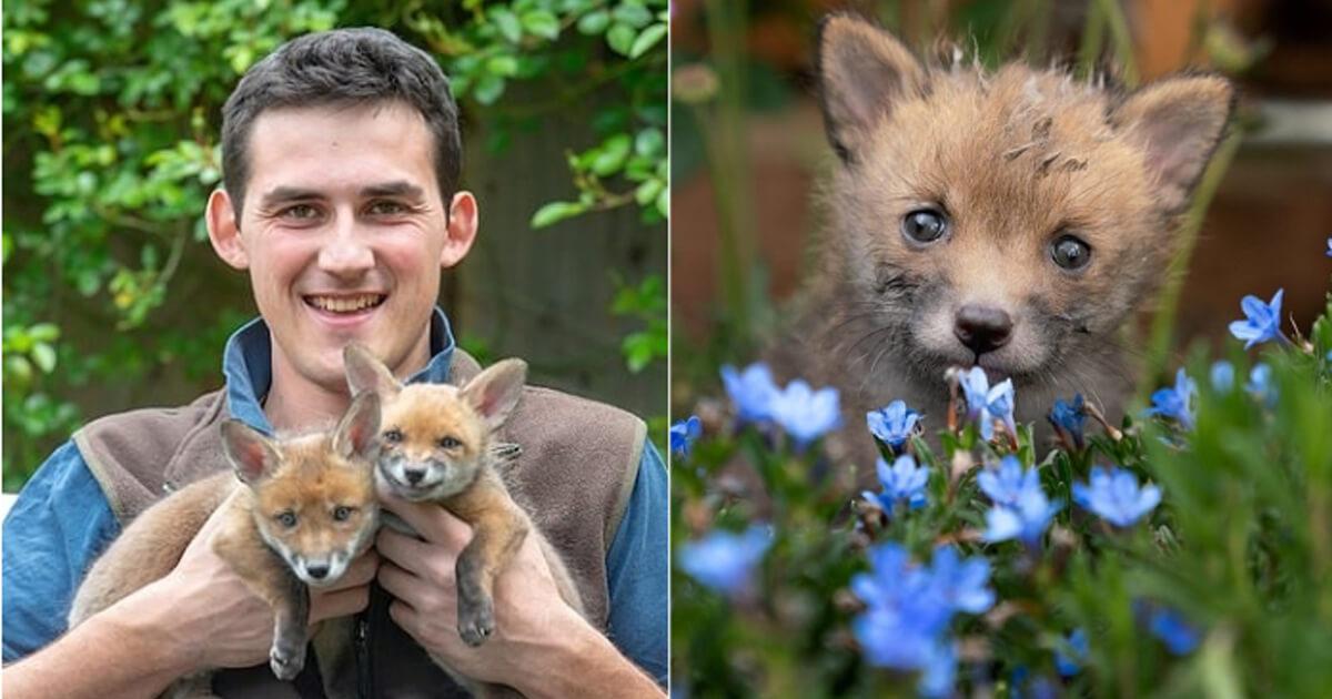 Jovem agricultor faz cesariana em raposa sem vida e salva quatro filhotes que ela esperava