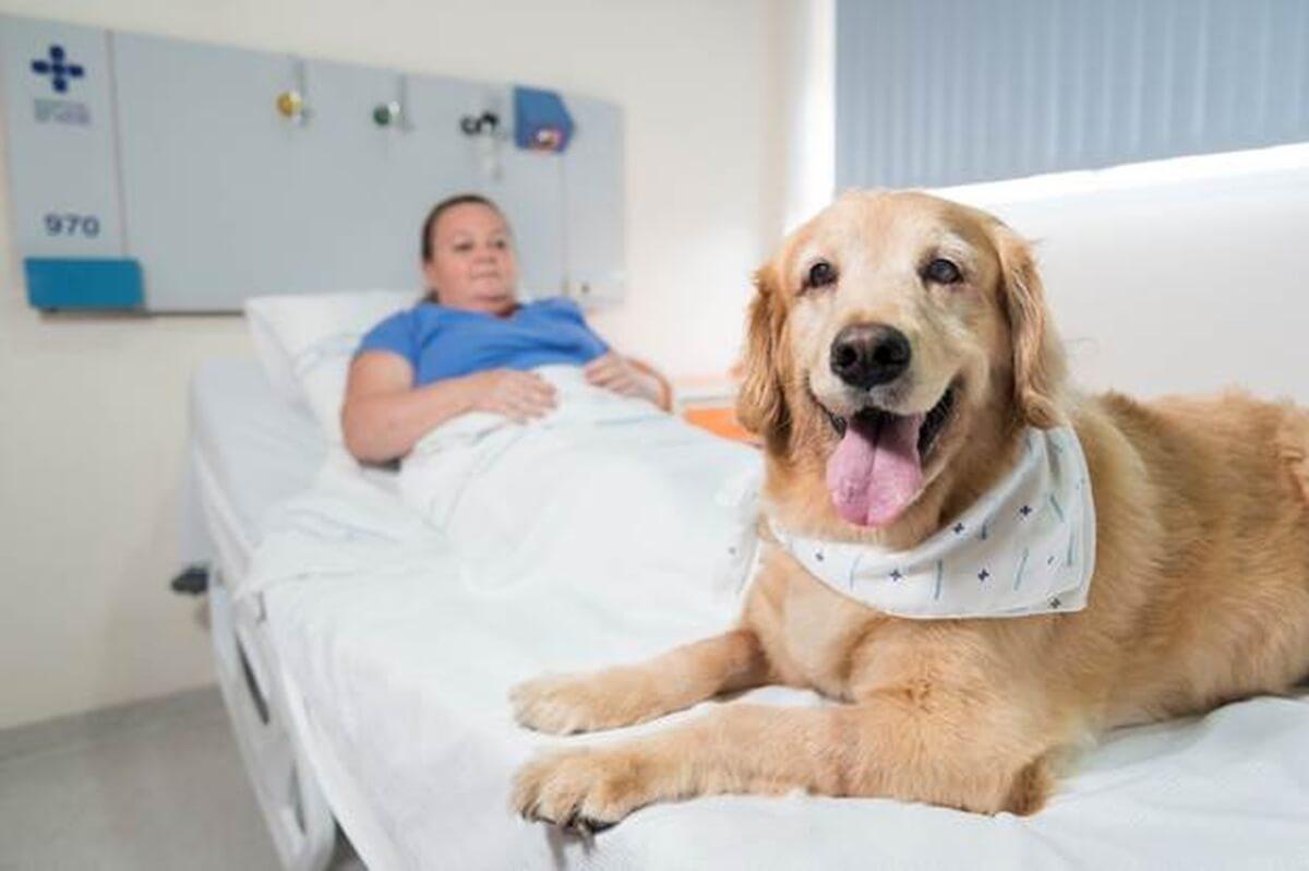 Resultado de imagem para hospital O amor como terapia: hospitais de Porto Alegre autorizam visita de animais de estimação a pacientes internados
