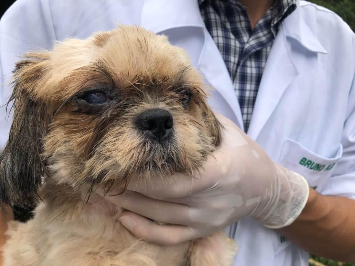 Resultado de imagem para Estresse de humanos contagia os cães, afirma estudo CONTI OUTRA