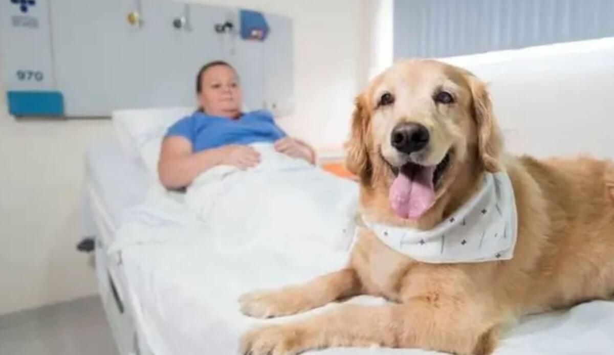 Resultado de imagem para No RS, animais de estimação agora podem ficar com seus donos durante internação em hospitais