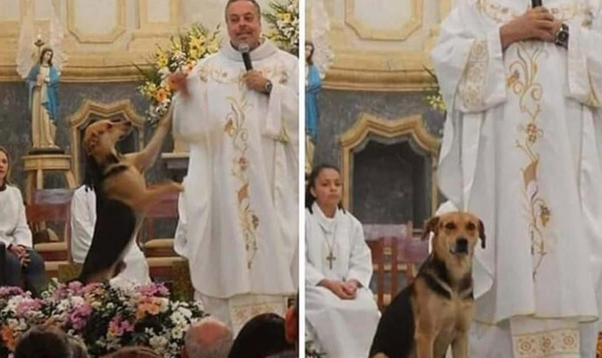 Resultado de imagem para Padre resgata cães de rua e os leva para a missa para serem adotados CONTI OUTRA