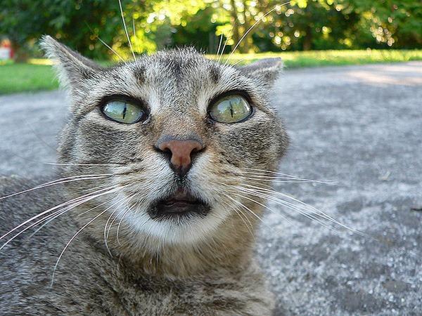 Gatos exibem expressões faciais para mostrar o que estão sentindo, diz estudo